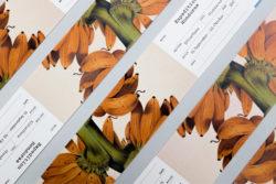 Bureau_Display_Graphic_Design_Visual_Communication_Lucerne_Zurich_Expedition_Honduras_13
